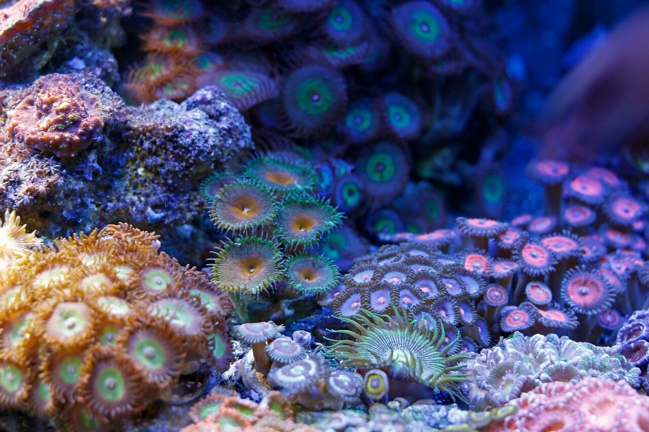 bobbym coral 20.jpg