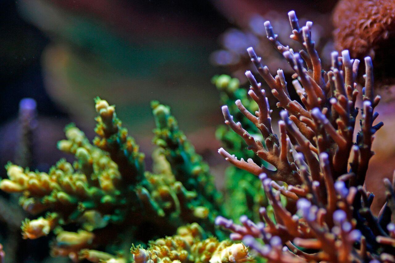 bobbym coral 5.jpg
