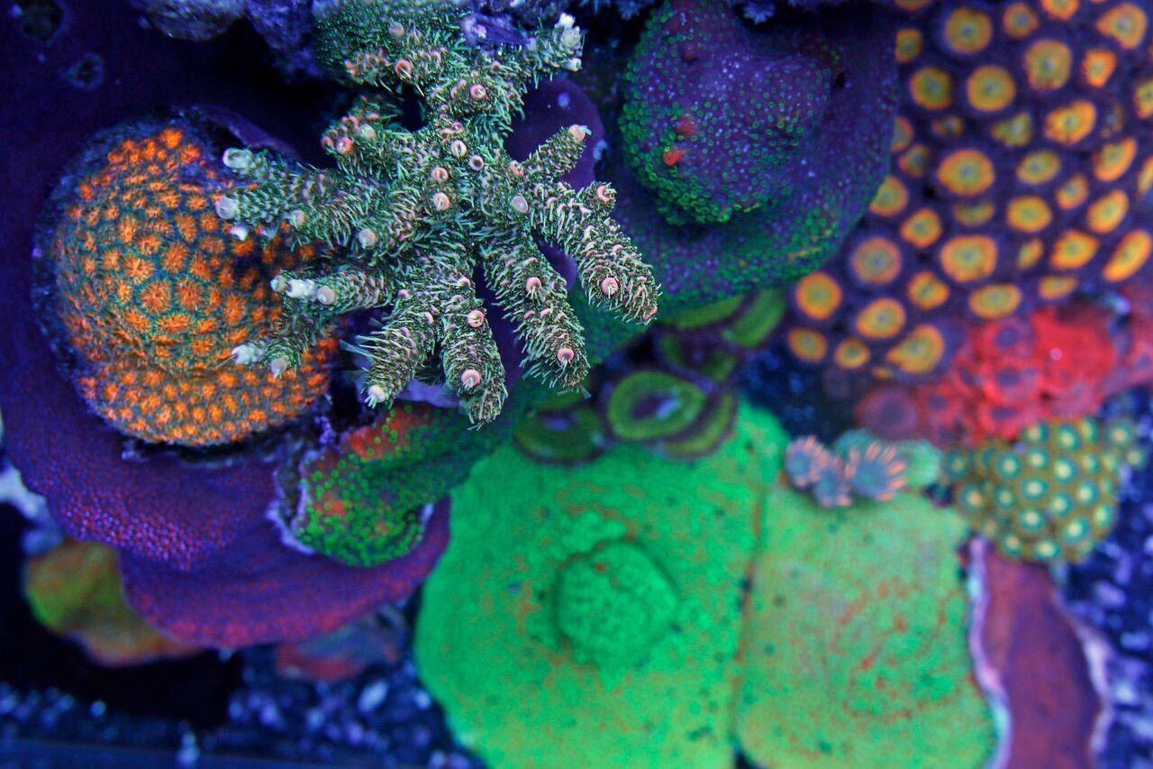 bobbym coral 6.jpg
