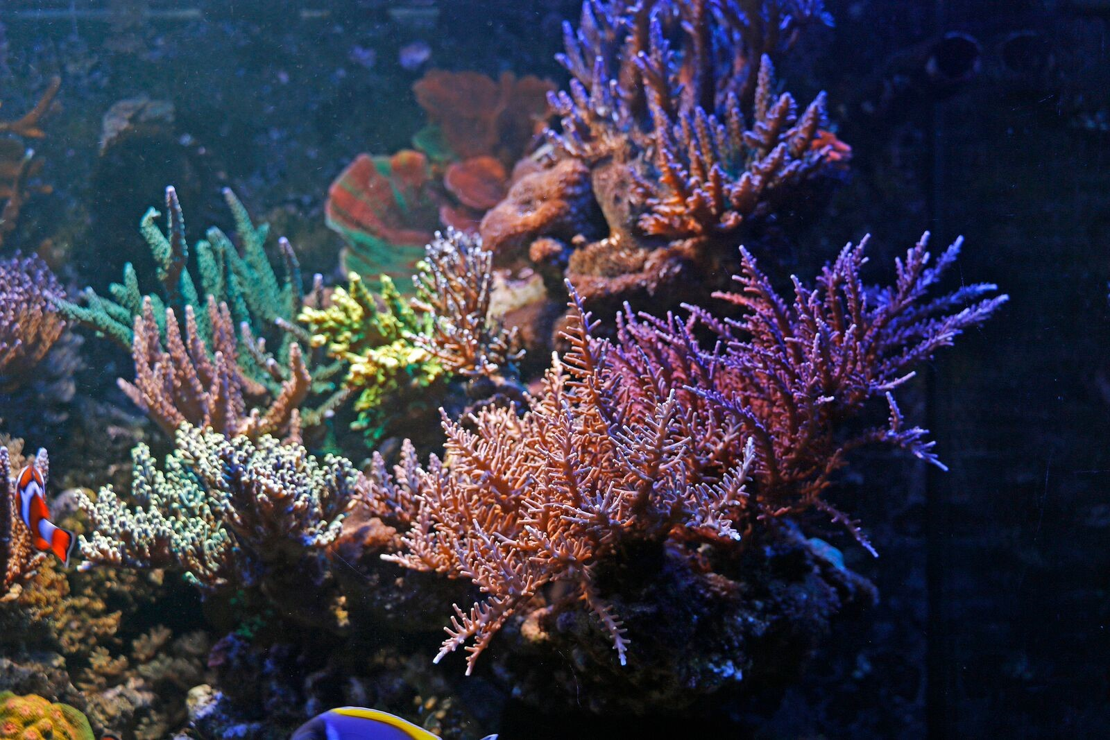 bobbym coral.jpg