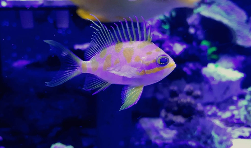 What type of fish is this reef2reef saltwater and reef for What kind of fish is this