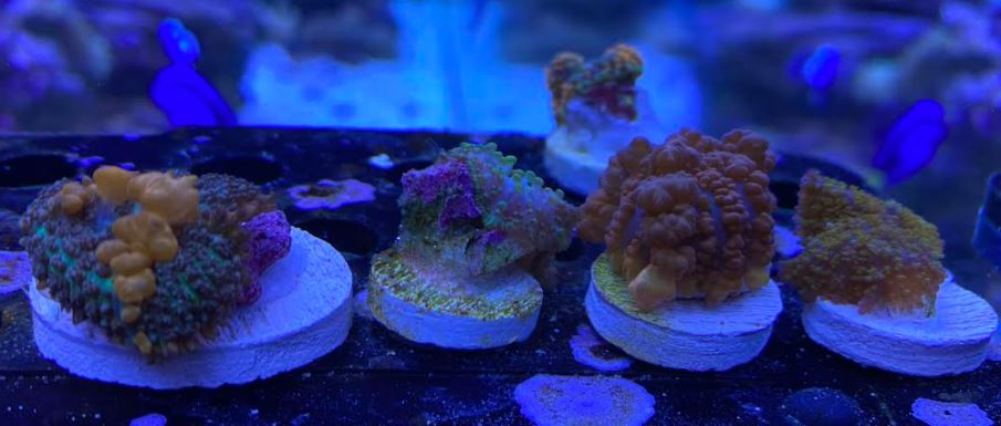 Bounce Mushrooms.JPG