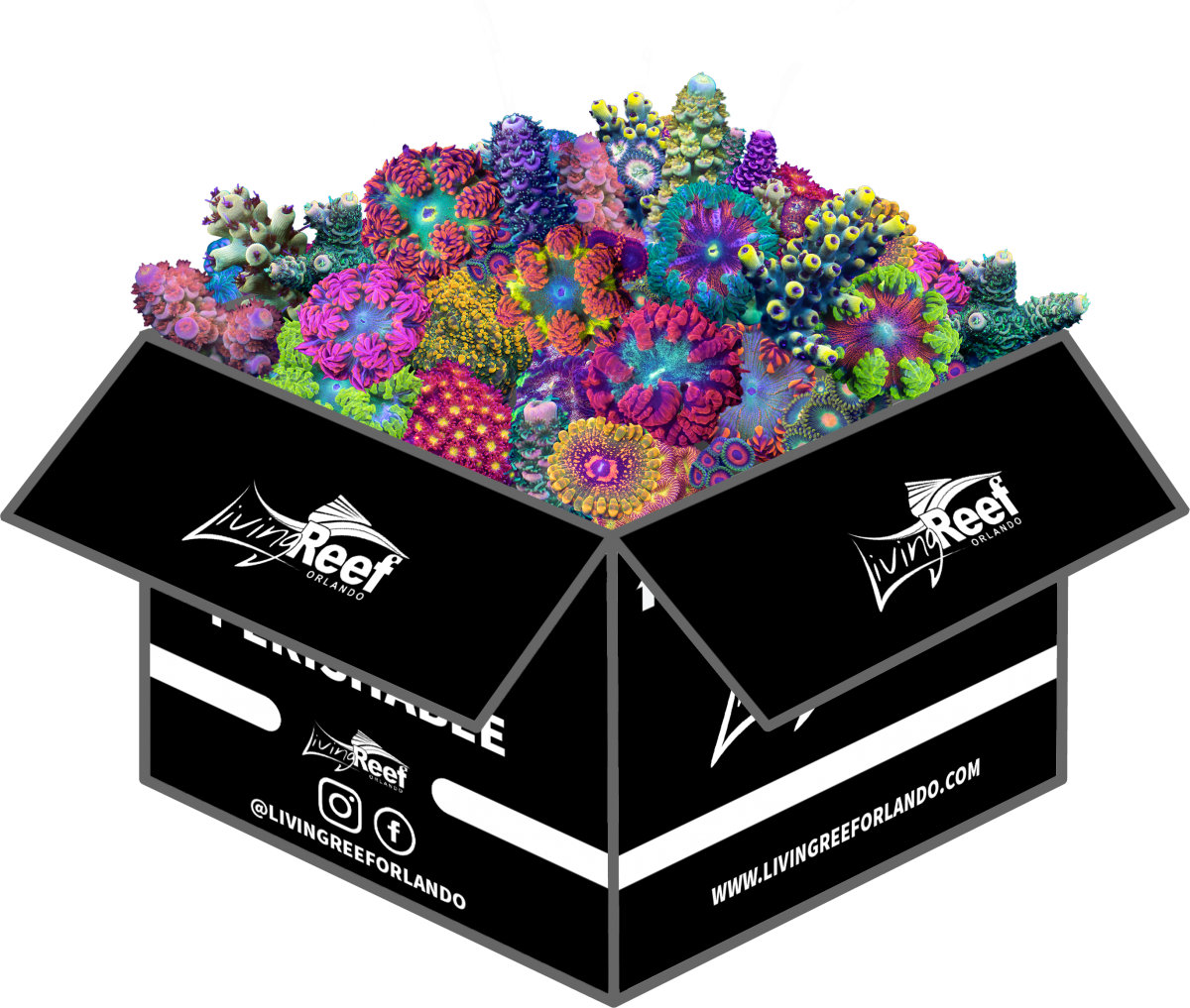 BOX With Coral.png
