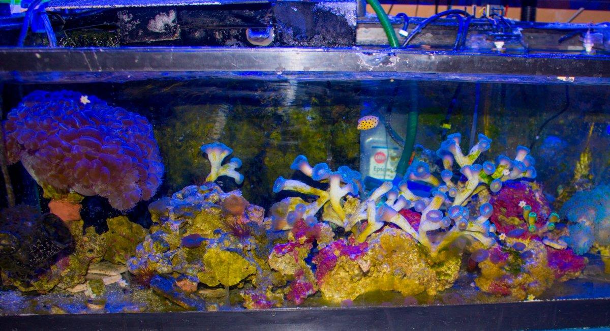 BoxFish-FragTank-3.jpg