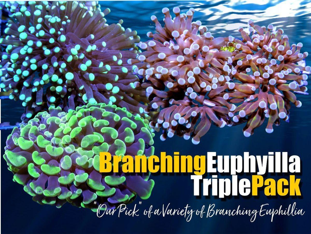 BranchingEuphillia_1200x.jpg