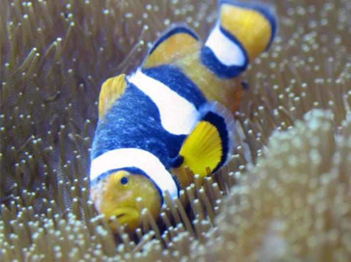brook humblefish b.jpg