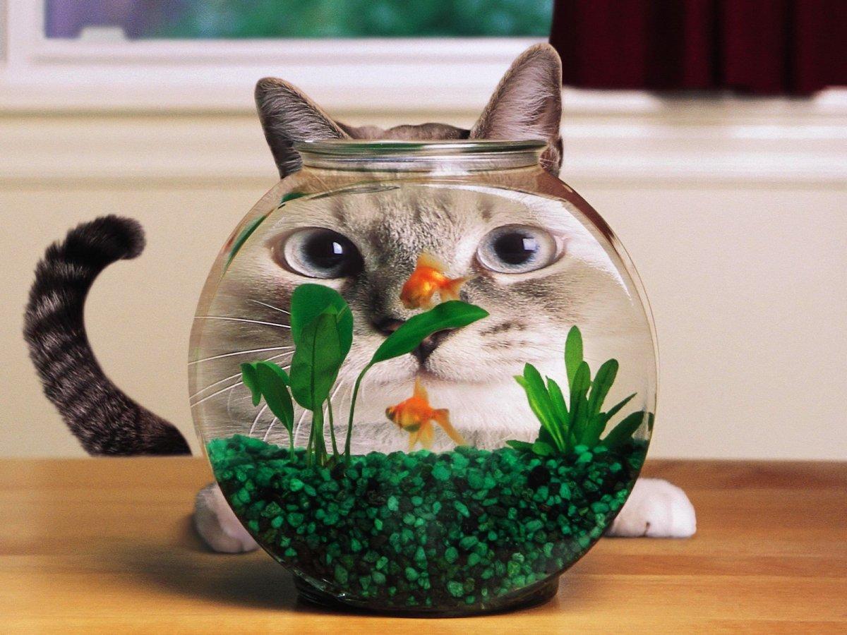 cat-funny-hd-wallpapers-2012.jpg