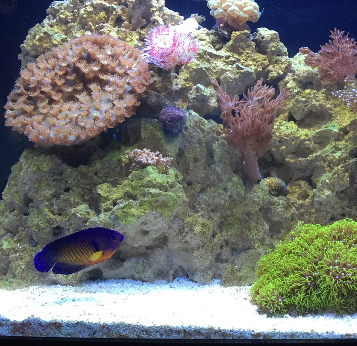 Euthanize a fish page 2 reef2reef saltwater and reef for How to euthanize a fish
