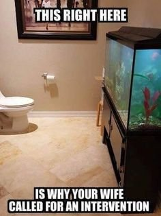 cca79c14818ed13eb85e2c1bd3670a5b--aquarium-meme.jpeg