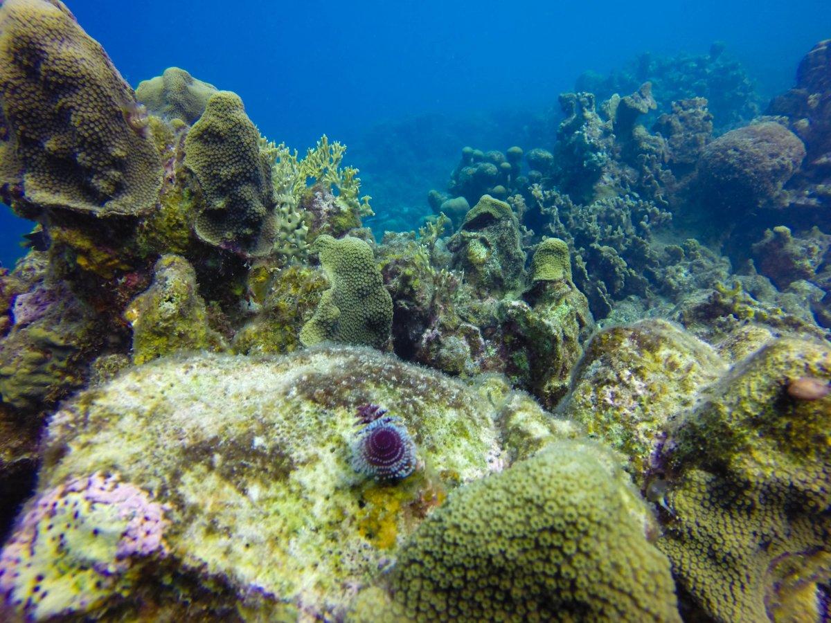 Christmas Tree Worm Rock Reef2reef Saltwater And Reef Aquarium Forum