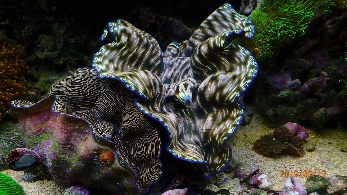 clam-jpg.1203765