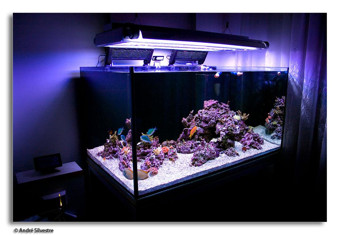 Man Cave Show Tank : Saltwater aquarium background color ideas