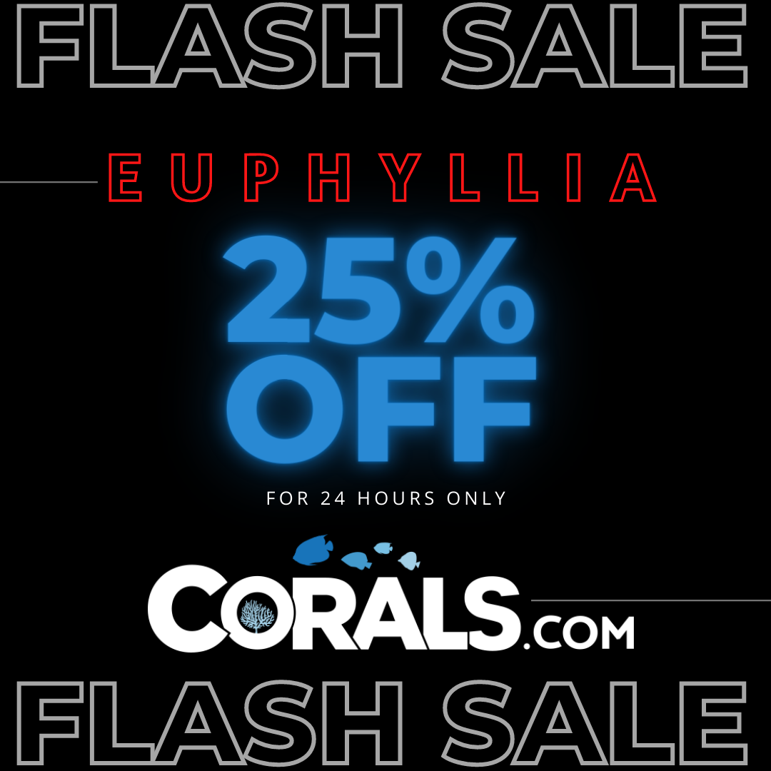 Copy of Copy of Animated Flash Sale Facebook Post Template.png