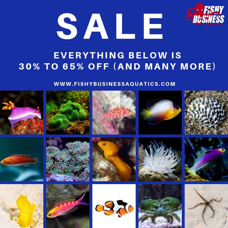 Copy of Copy of On Sale.jpg