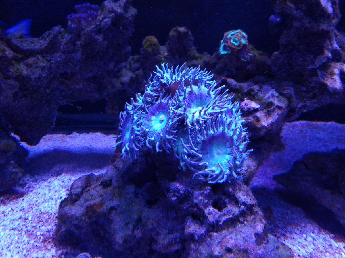 Coral 01 20.jpg