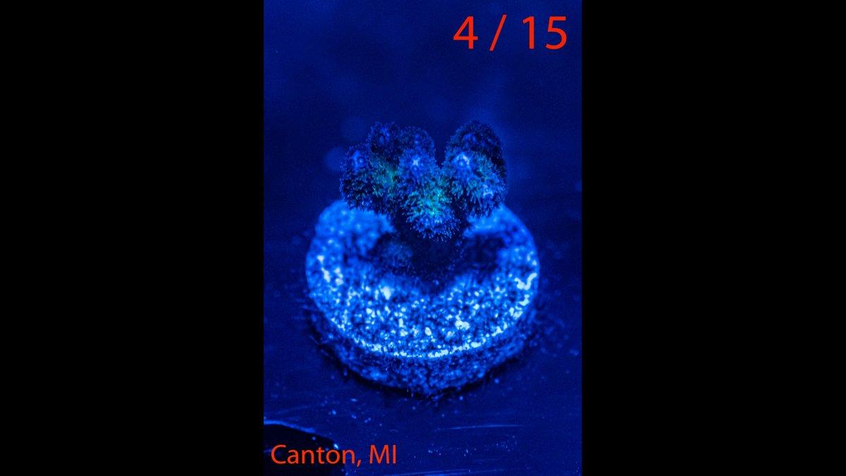 Coral-04.jpg