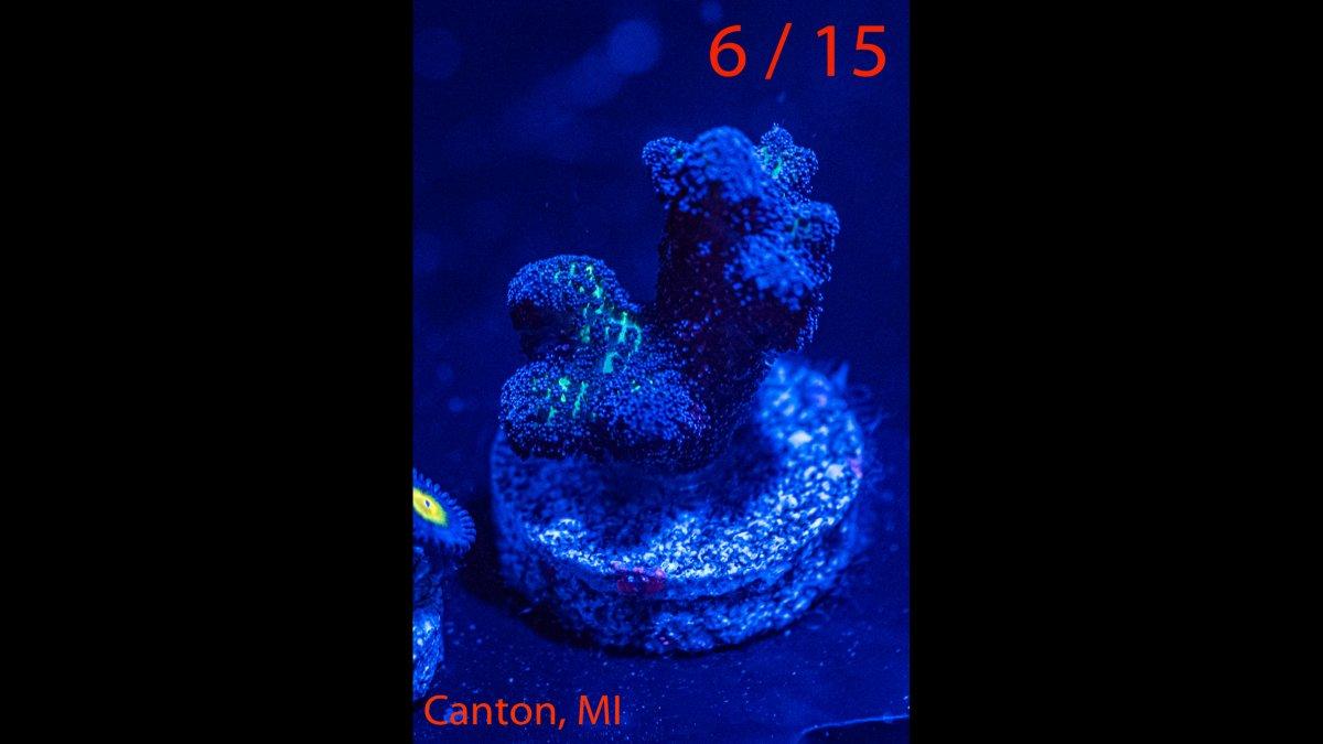 Coral-06.jpg