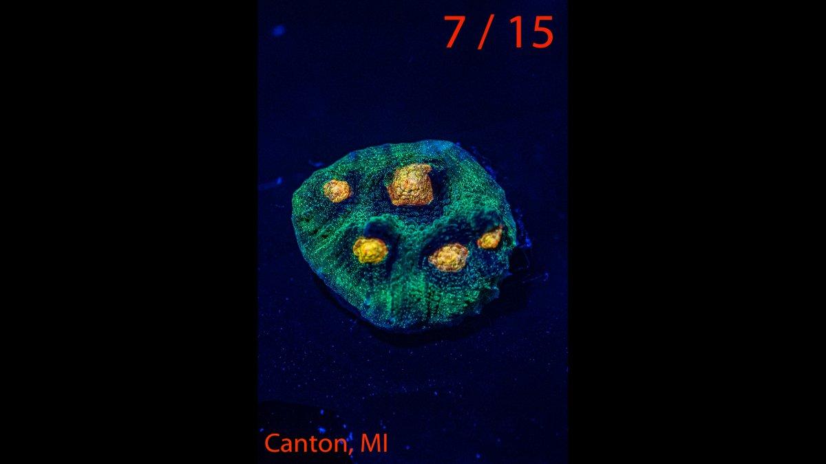 Coral-07.jpg