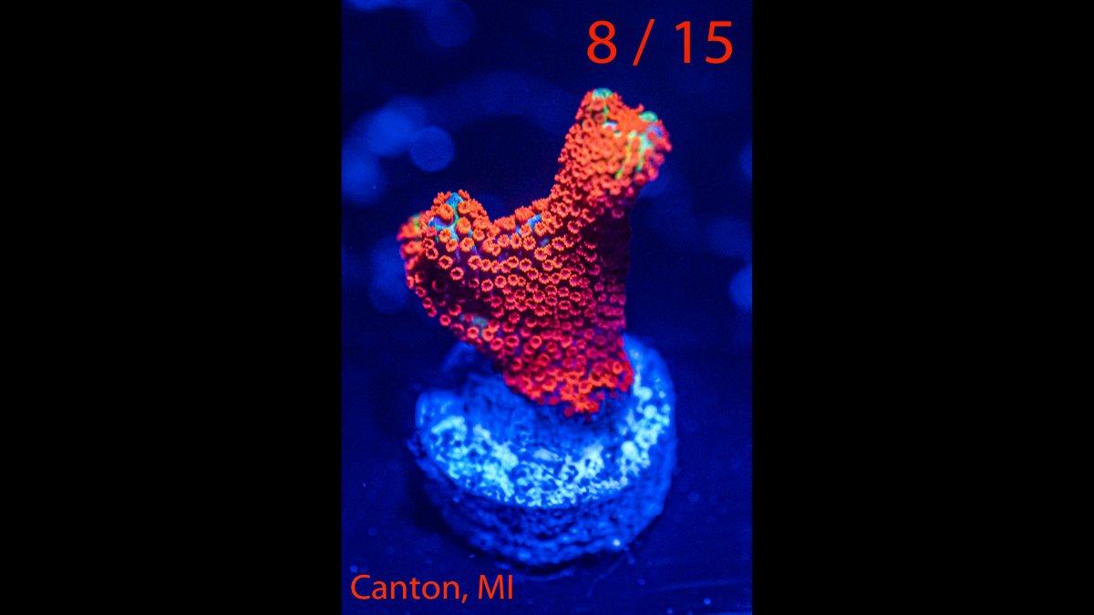 Coral-08.jpg