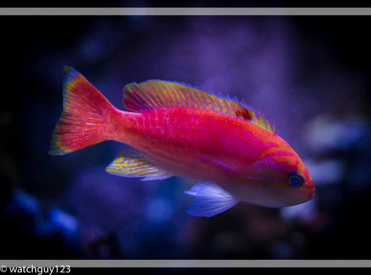 coral-1-2.jpg