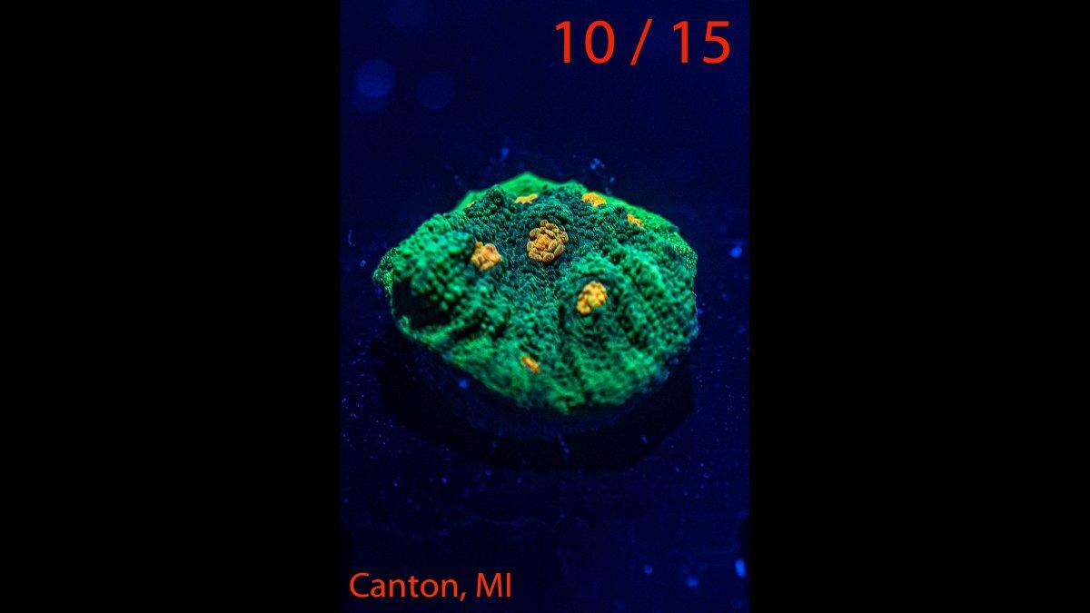 Coral-10.jpg