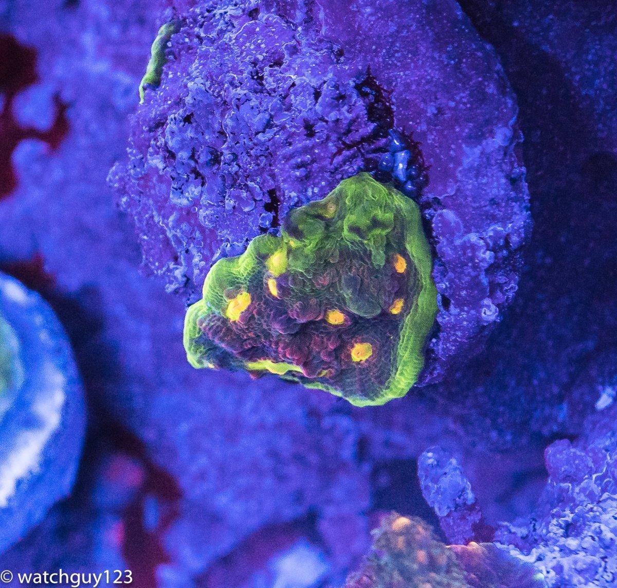 coral-107.jpg