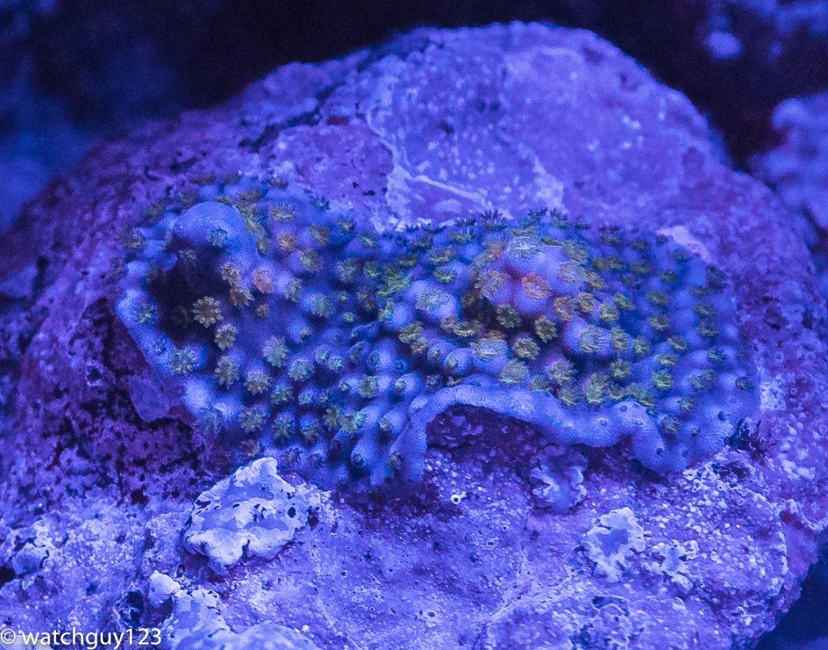 coral-108.jpg