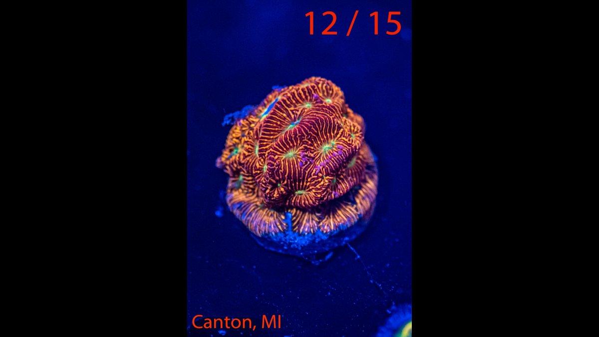 Coral-12.jpg