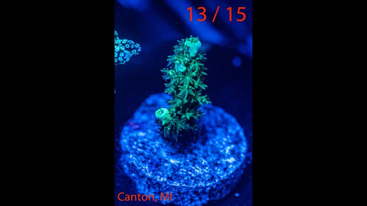 Coral-13.jpg