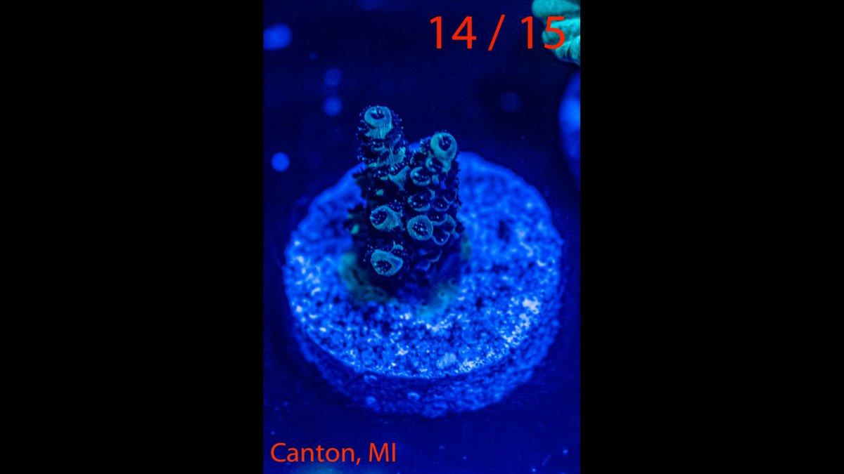 Coral-14.jpg