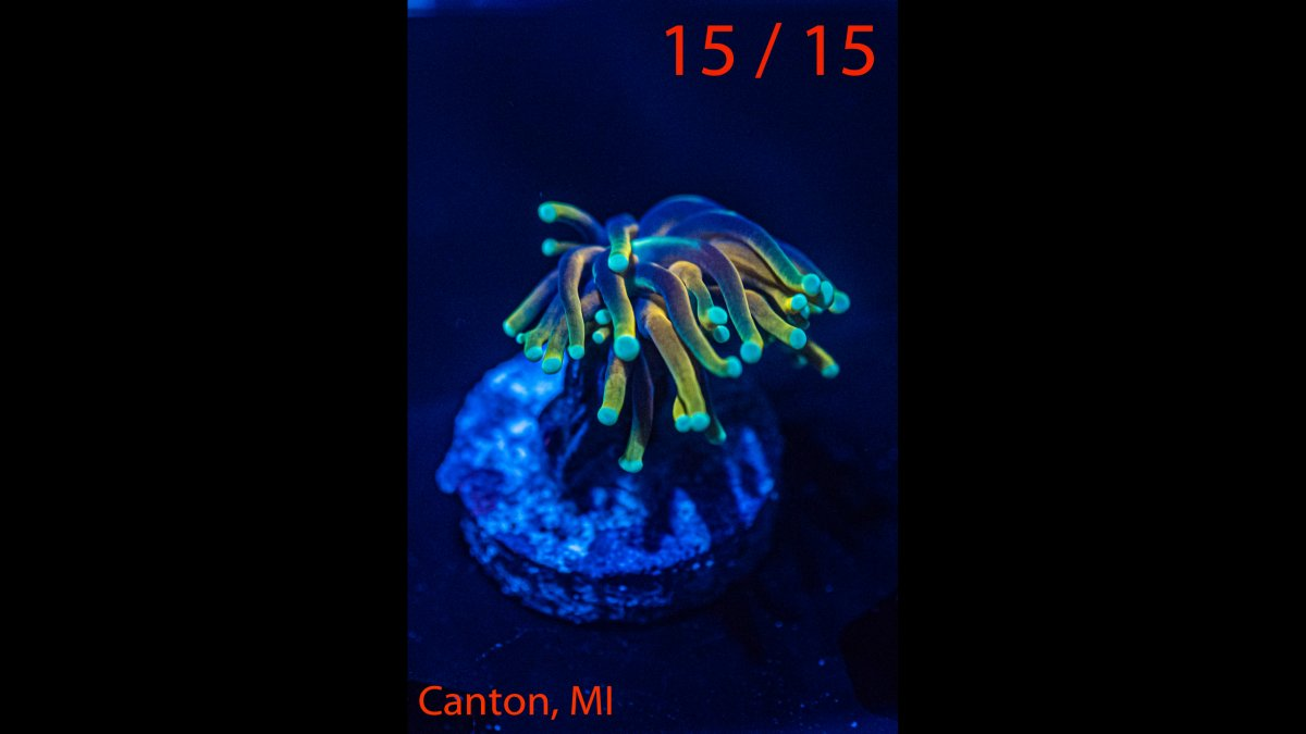 Coral-15.jpg