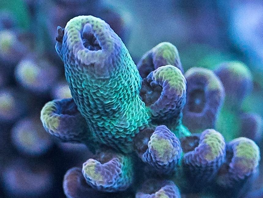 coral-22-2.jpg