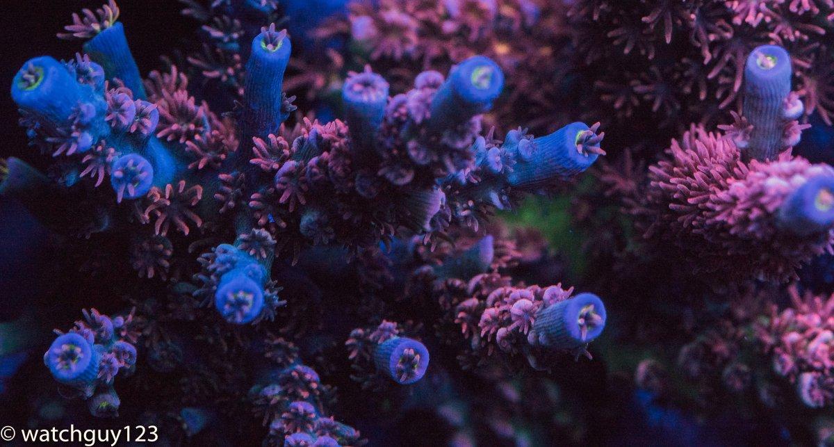 coral-25.jpg