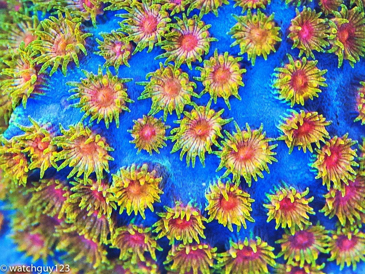 coral-29.jpg