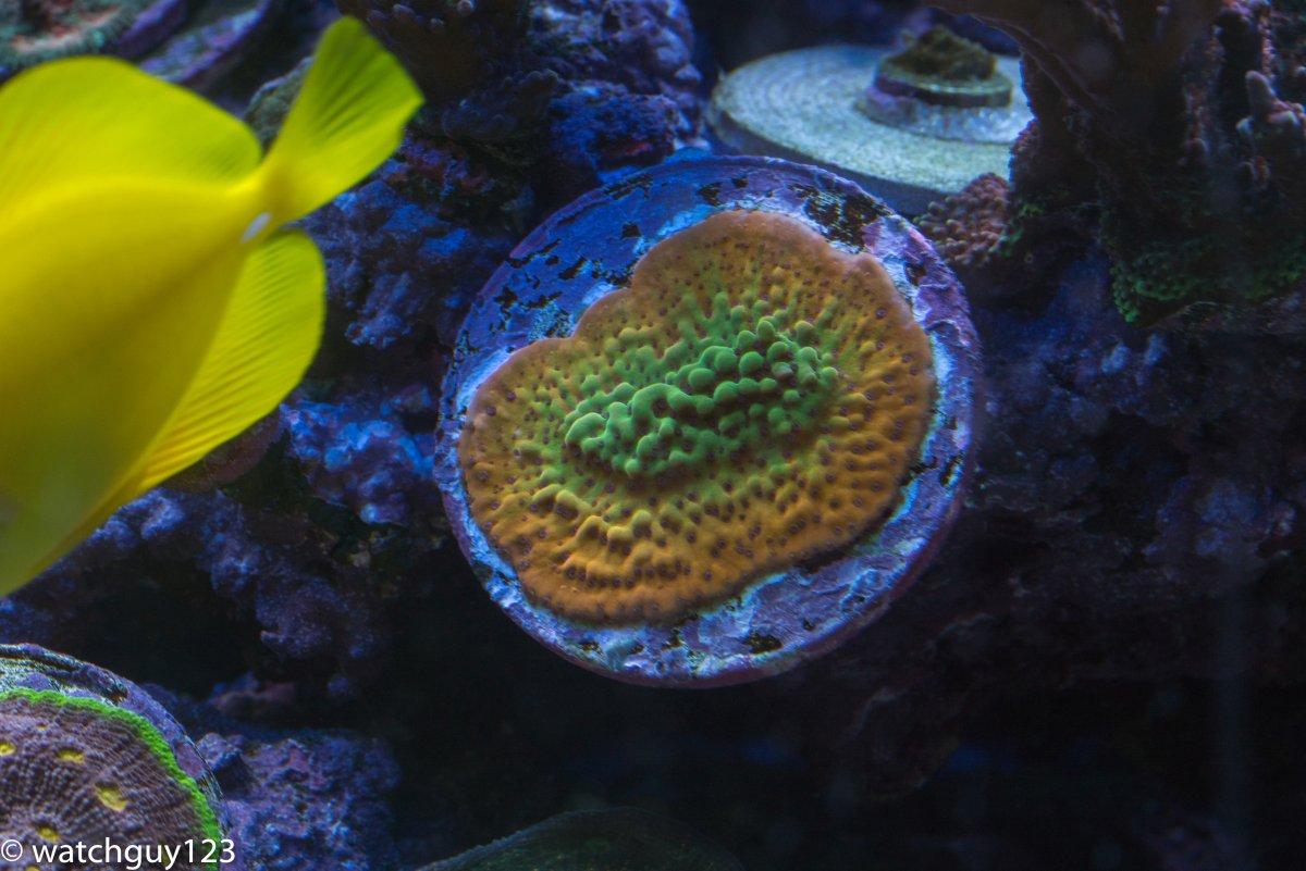 coral-302.jpg