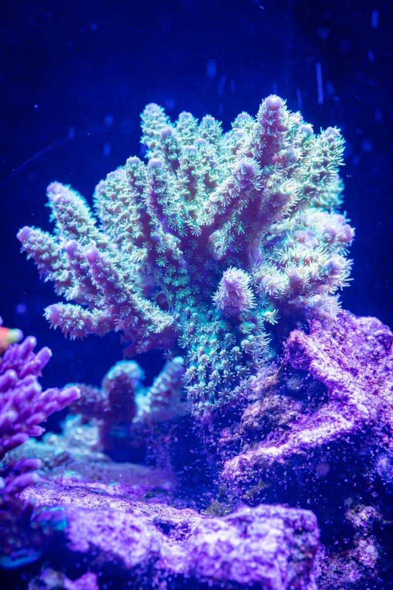 coral-3082.jpg