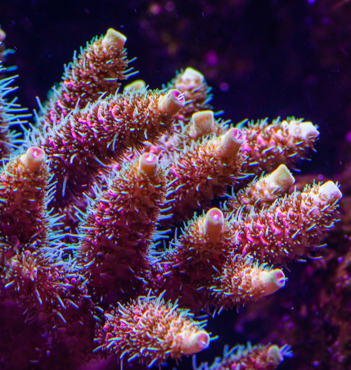 coral-3090.jpg