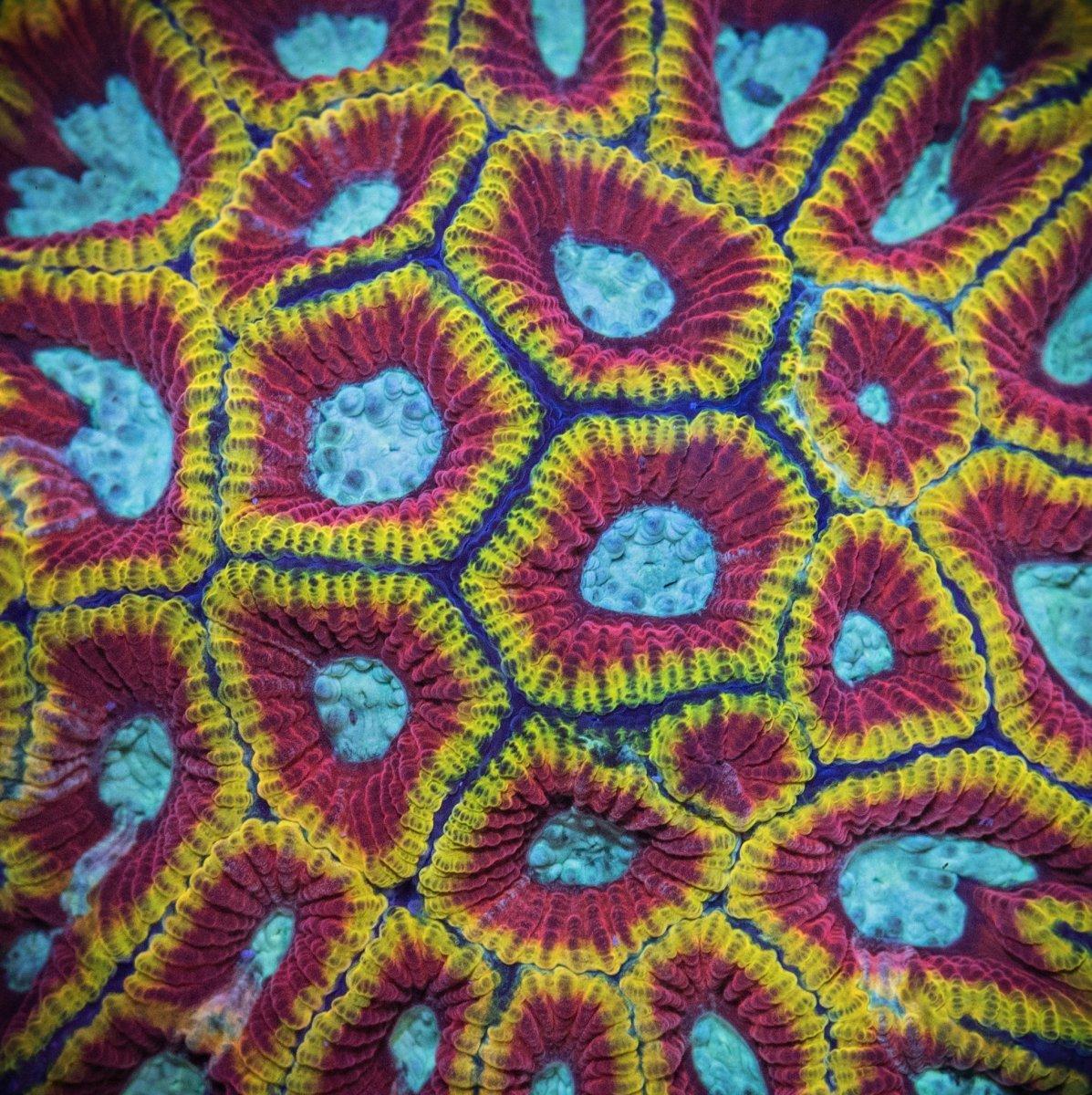 coral-41-2.jpg
