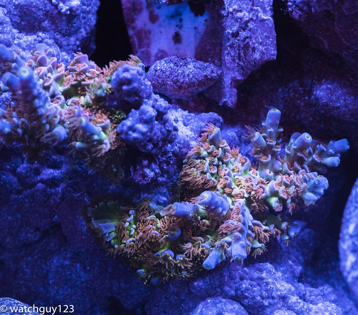 coral-93.jpg