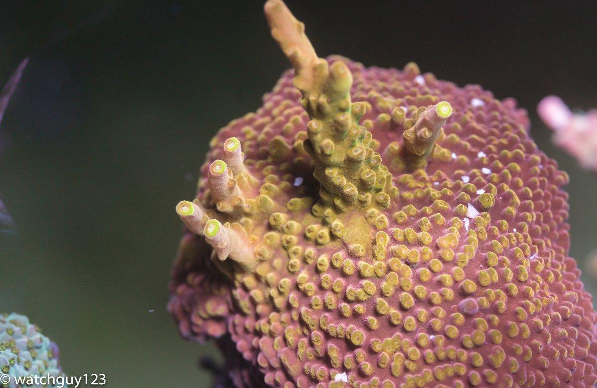 coral-94.jpg
