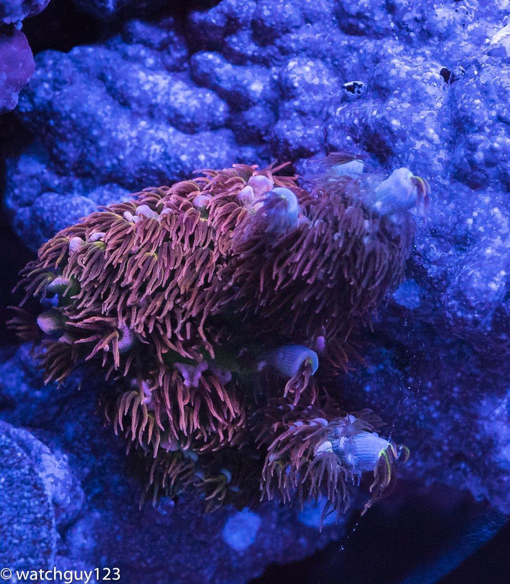 coral-95.jpg