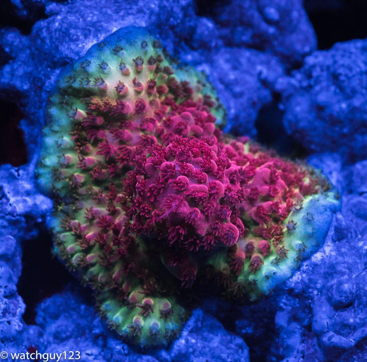 coral-98.jpg