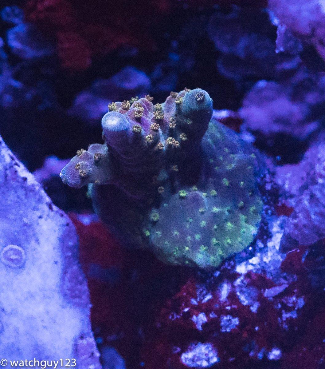coral-99.jpg