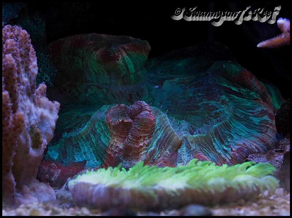 coral brain.jpg