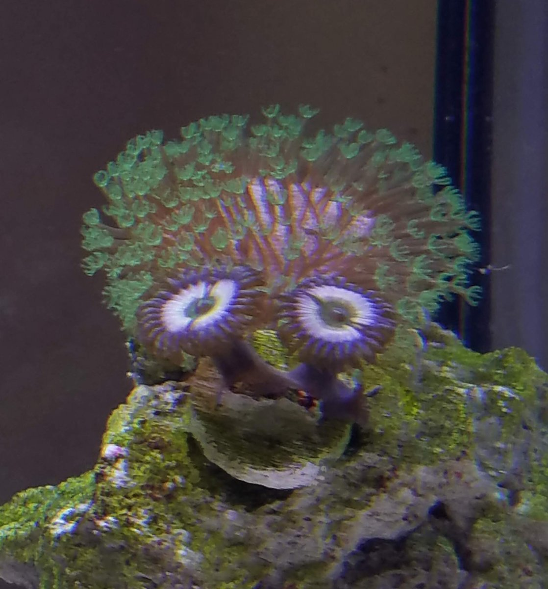 coral face photoshop.jpg