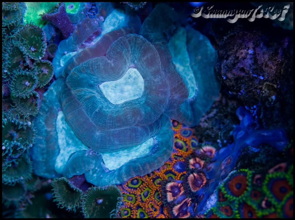 coral favia.jpg