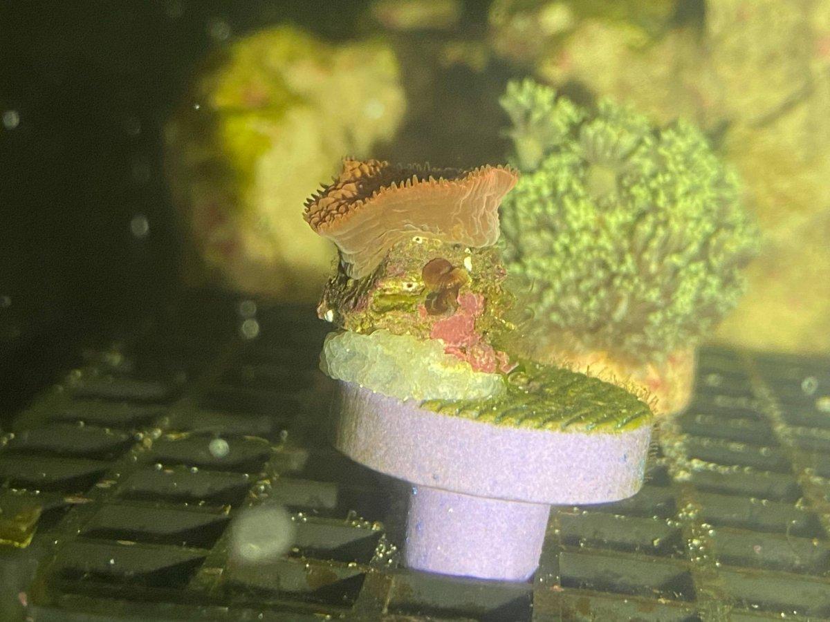 Coral ID 2.jpg