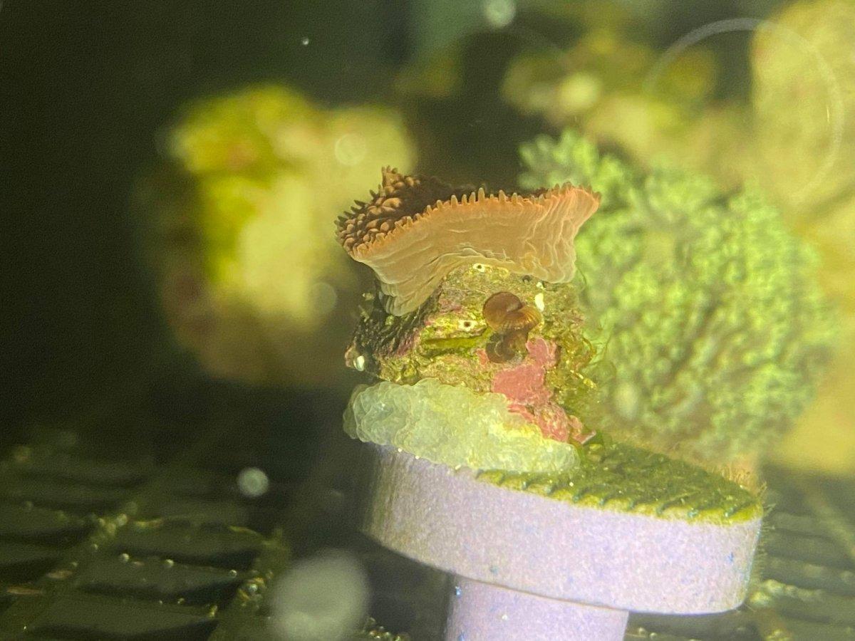 Coral ID 3.jpg