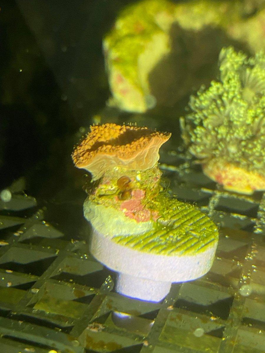 Coral ID 4.jpg