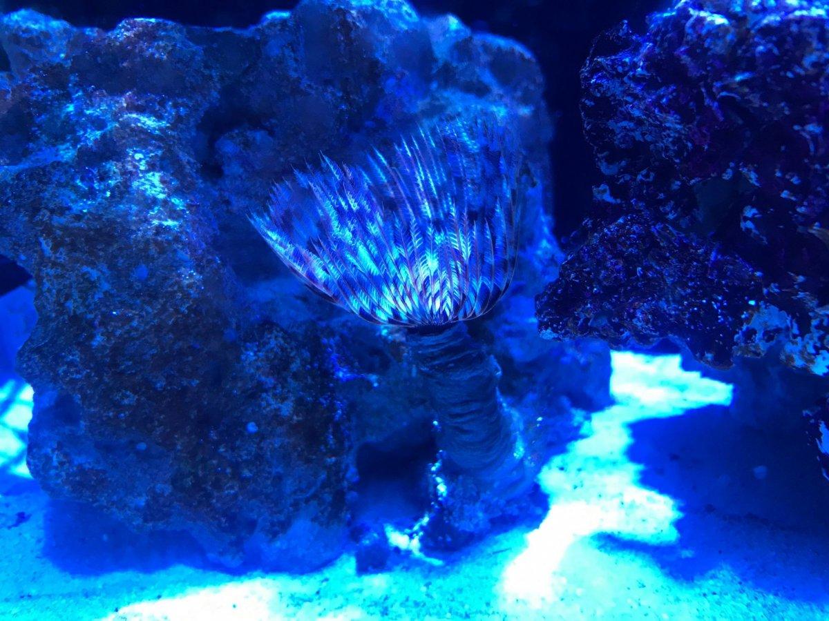 Coral ID 5.jpg